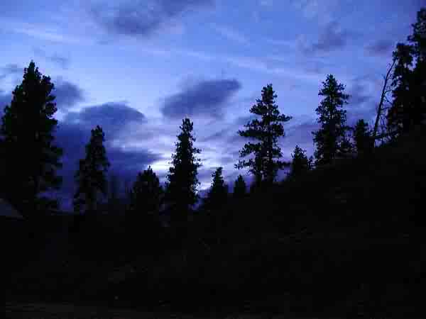 forest_night_sky