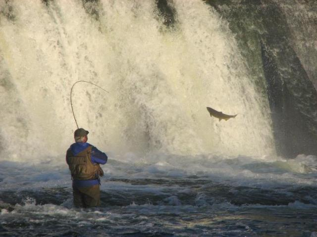 Damfishing