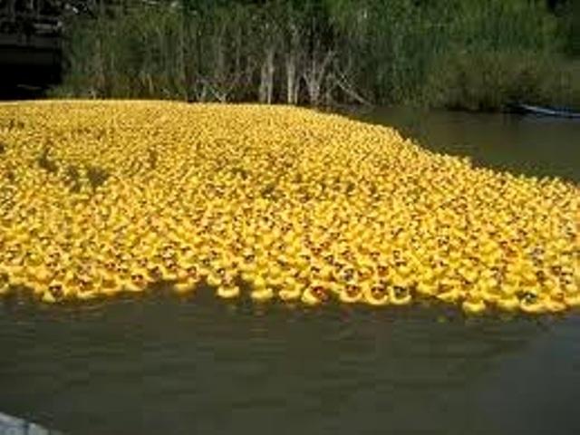 Jist Ducky