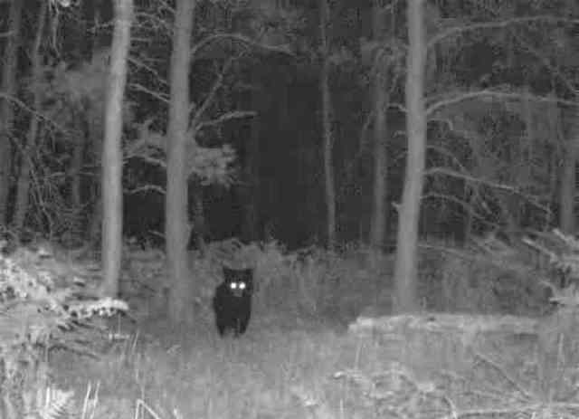 Bear From Woods