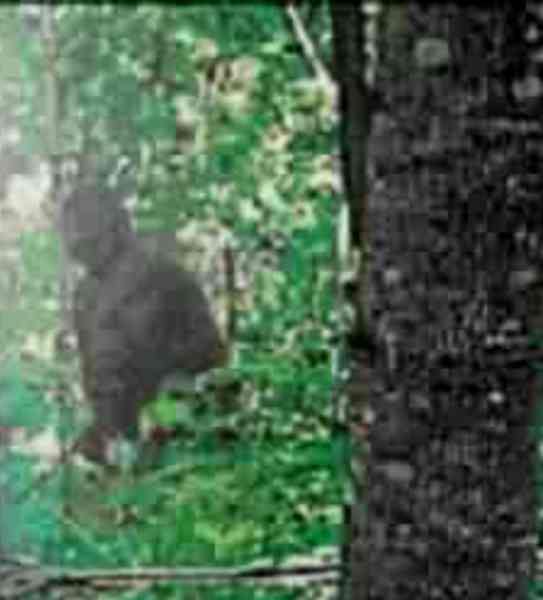 Michigan Bigfoot 2 - Copy