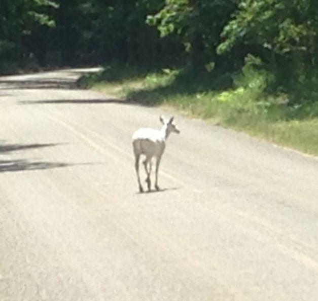 7232b8d712bc4be2f224a0a0af886091--deer-hunting-michigan