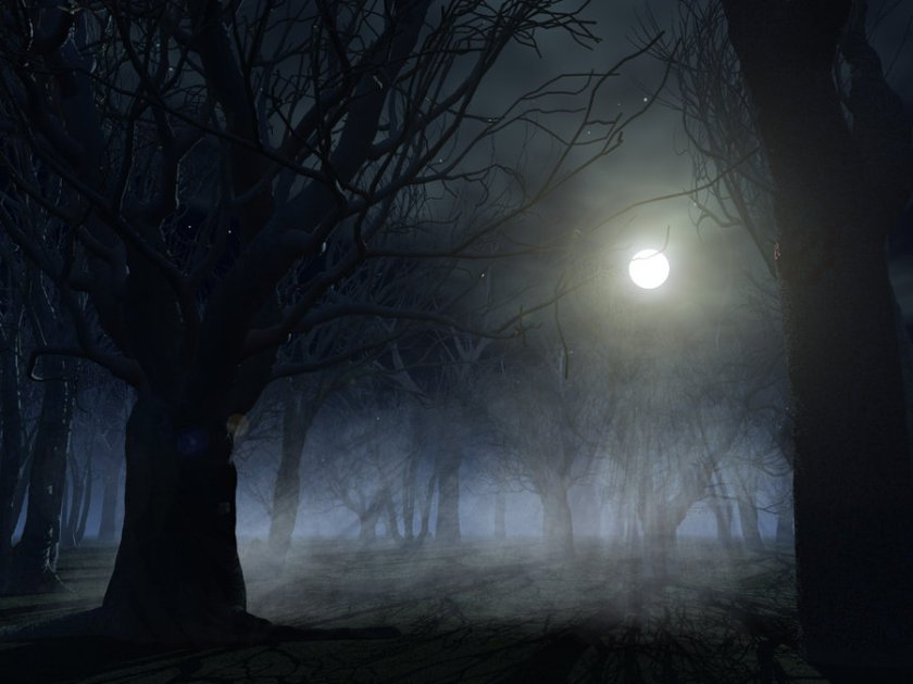 spooky_forest_background_by_indigodeep