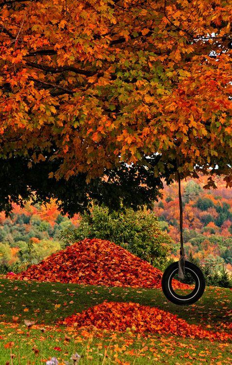 0507de3b5e9f770d41431f71b83b14d5--autumn-trees-fall-leaves