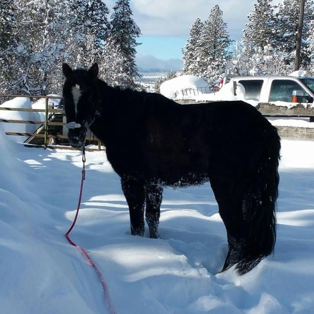 rescued_horse_t1140